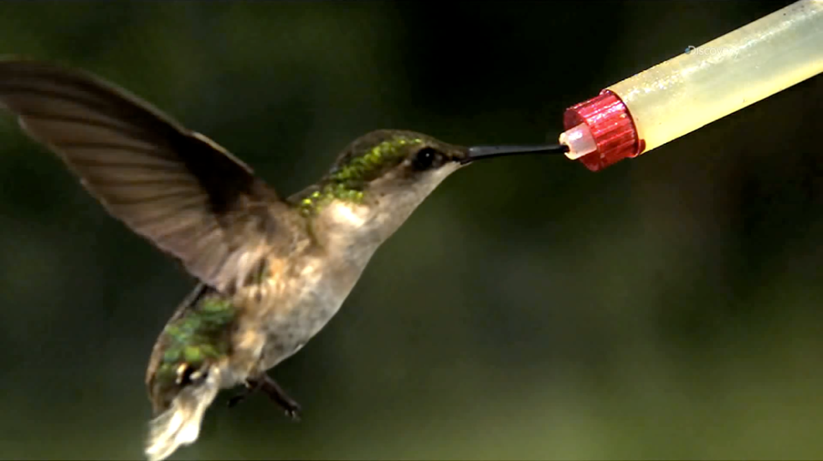 Watching A Hummingbird Fly in Ultra Slow-Mo Shows Just How Incredible They Are (Video)