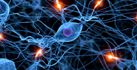 Digital image of neurons and synapses