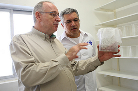 Alvo Malavasi (left) examines a sample of mosquitos with a colleague