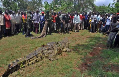 Villagers stare in awe at the monstrous reptile (Photo: AFP/Peter Busomokepeter)