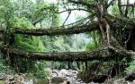 """Umshiang Double-Decker Root Bridge"""